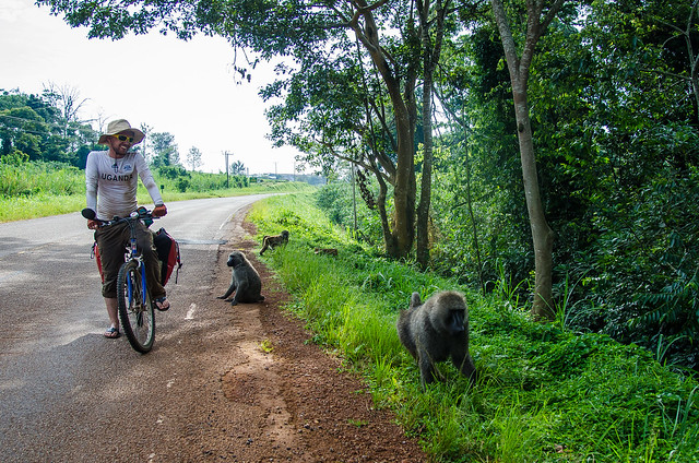 Close Encounter with Baboons