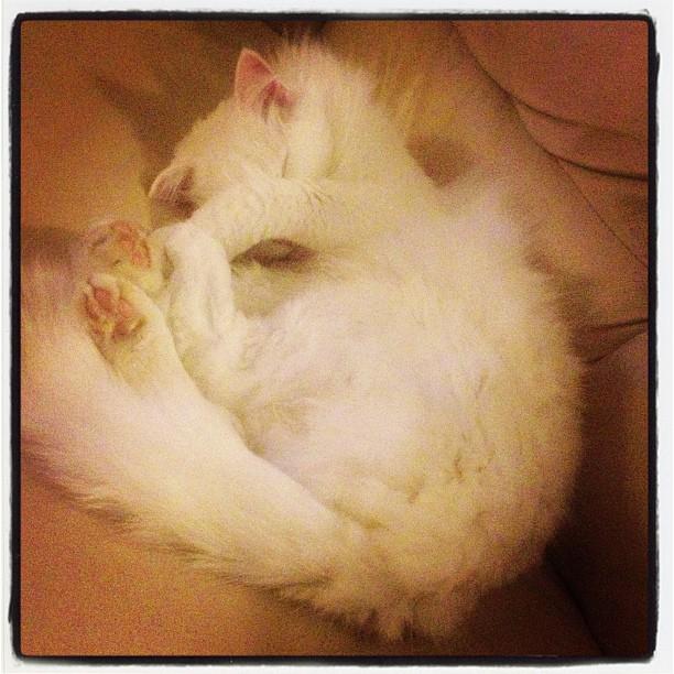 I'm hiding... #evil #evil_cat #cat #sleepy #kitty #kittyporn #catporn #pussyporn #pussy #jasmine
