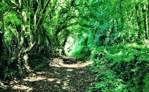 Saxon lane