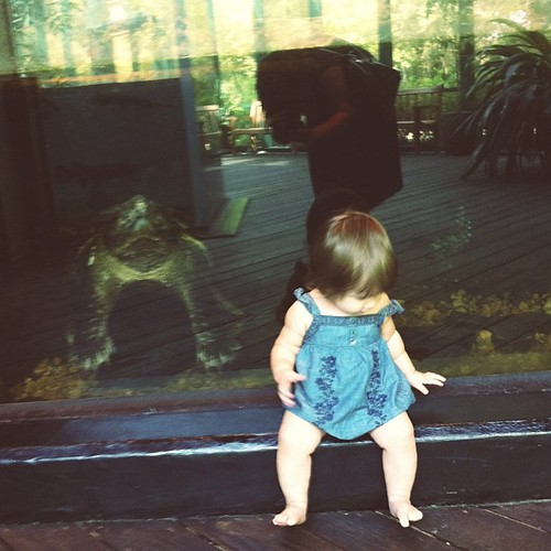 Lillian chillin' with an alligator snapping turtle.