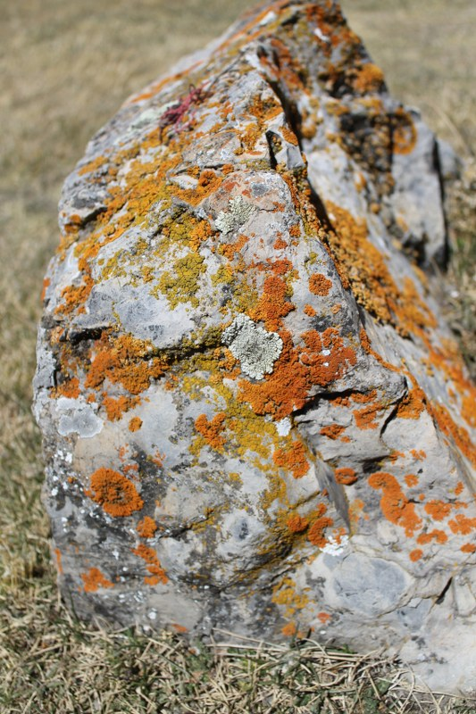 Lichen splattered rock near Viconga