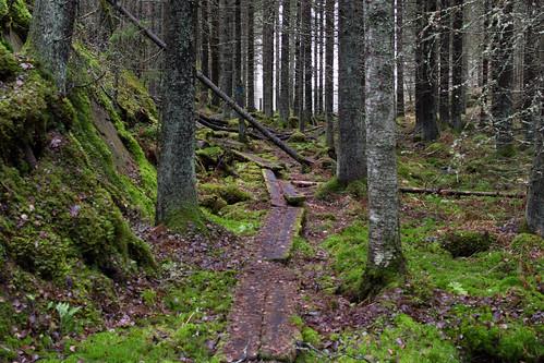 autumn nature forest finland nikon fi recreation orivesi pirkanmaa d7100