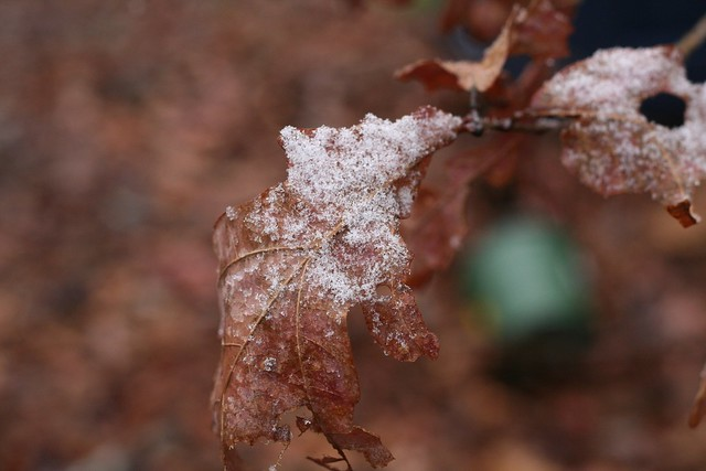 first snow :: by sophie