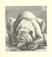 Image taken from page 43 of 'Nimrod in the North, or hunting and fishing adventures in the Arctic regions'