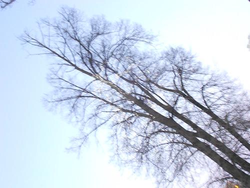 одно дерево макс