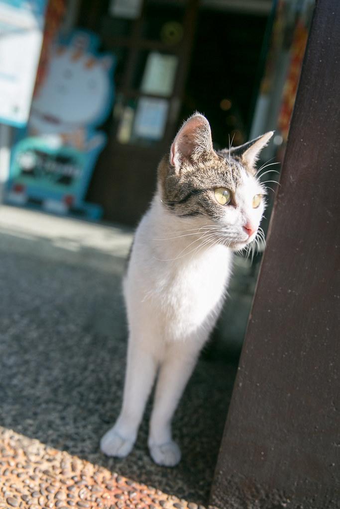 分享可愛貓咪照!2014 再訪猴硐 @3C 達人廖阿輝