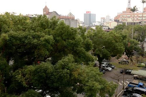 宜蘭陽明醫院樟樹群。(攝影:楊國銓)