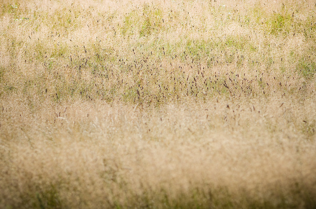 Dormir dans les arbres - soleil levant sur les herbes folles