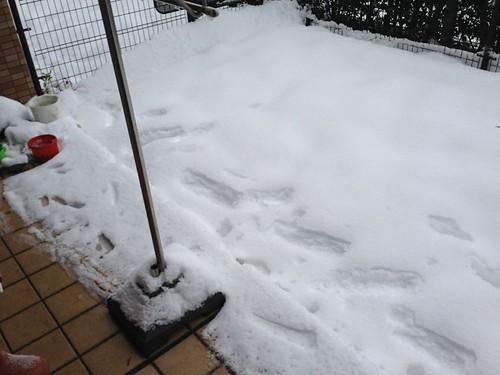 2014年2月の大雪