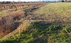 Les sentiers du vignoble...