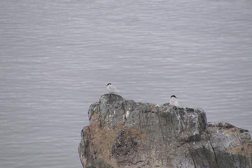 175 Wandeling Halfmoon Island - sternen