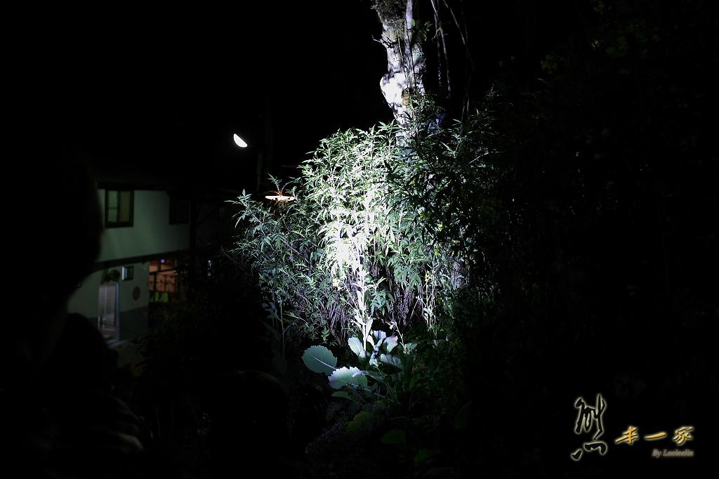 奮起湖冬季螢火蟲活動| 龍雲農場