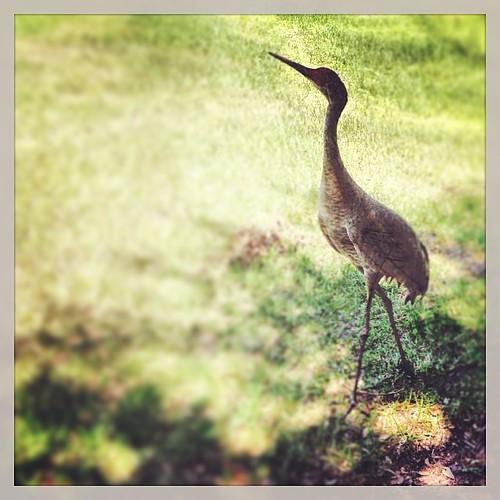 Crane (126/365)