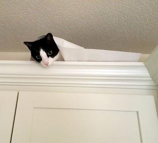 bess paper towel