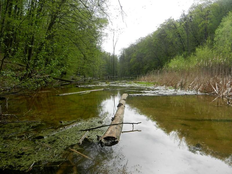 Голосеевский лес Киев