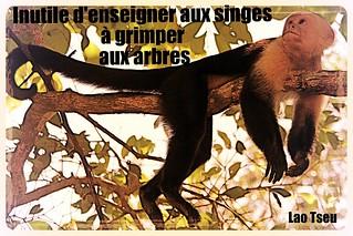 Inutile d'enseigner aux singes à grimper aux arbres - Costa-Rica
