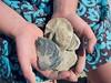 Fossils found