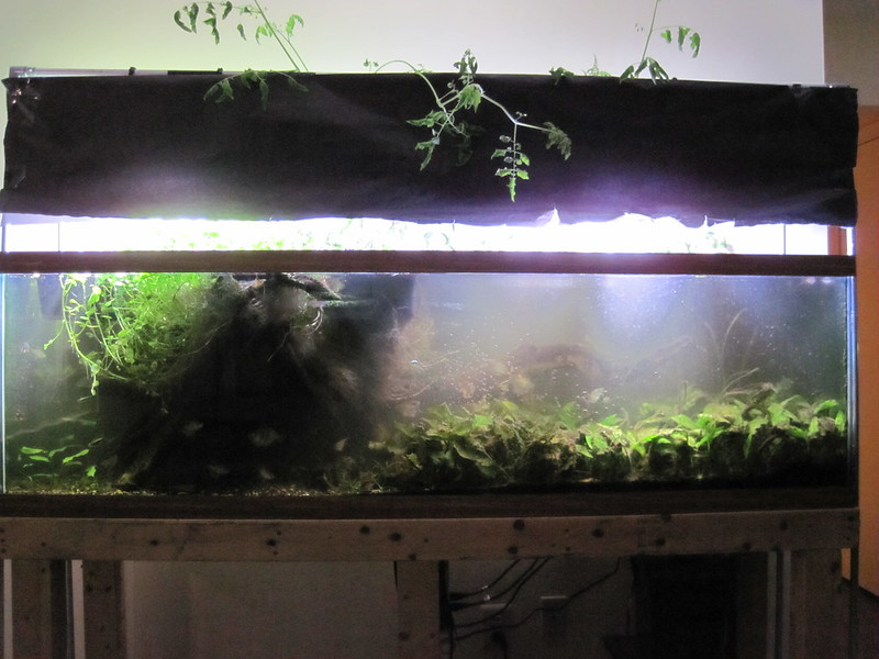 large aquarium with plants growing out the top