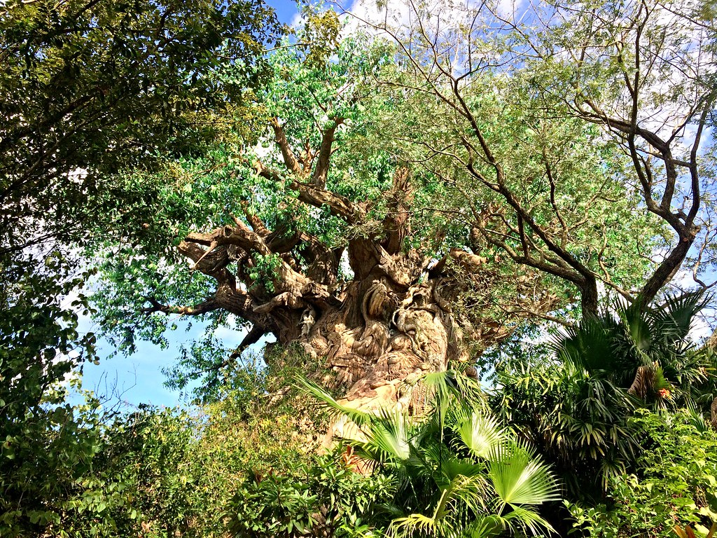 Animal Kingdom Day