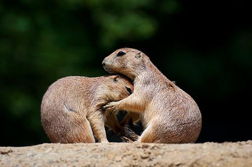 Give Me a Hug!