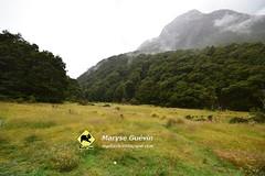 01 Greenstone track Nouvelle-zélande