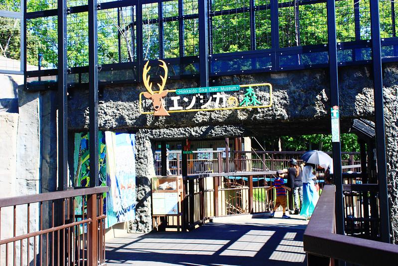 Asahiyama Zoo in summer in summer