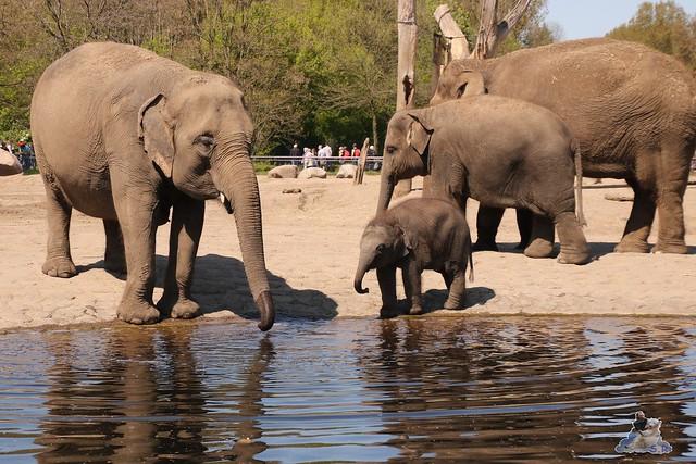 Tierpark Berlin 05.05.2016  0115