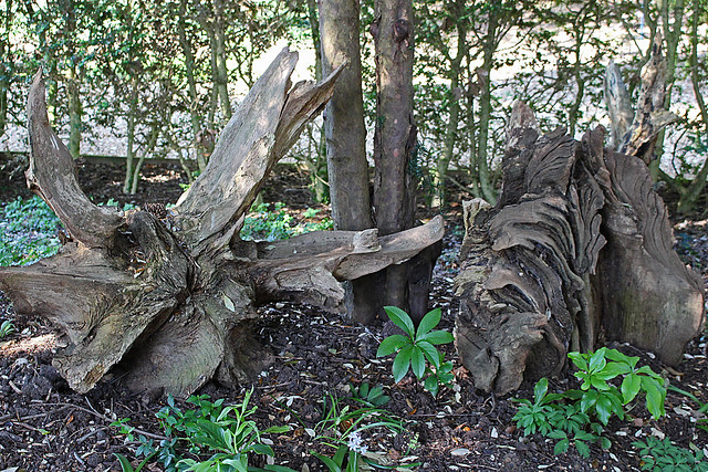 The Stumpery, Ickworth House Gardens (4)