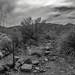 El Paso Exploration by Barb McCourt