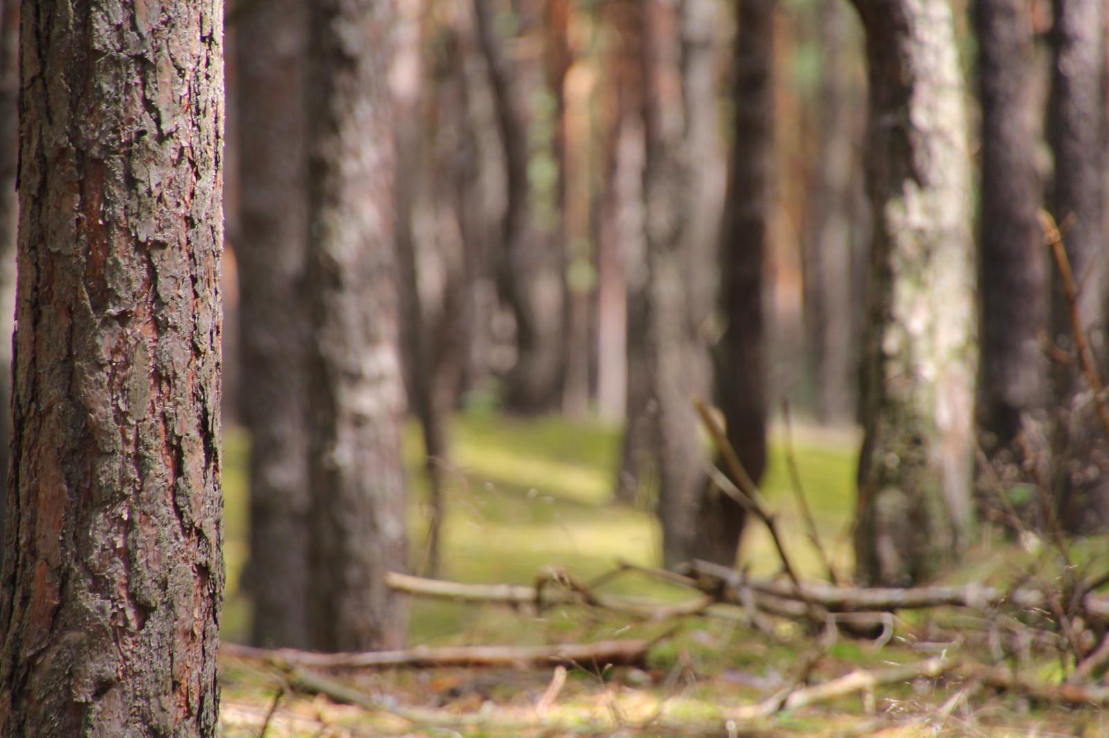 Alltagsfluchten Wald