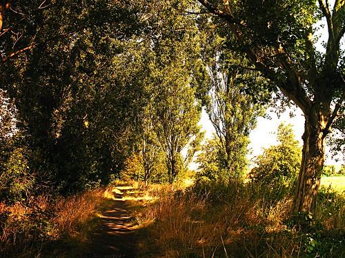 city uk flowers blue trees wild sky plants sun flower tree grass golden shadows path sunny kingston shade fields hull dappled rockford