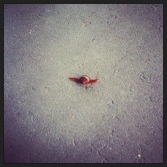 Cute little random mutant snail thing! #whoa #wtf #instadaily #picoftheday #photooftheday #igers #iphone #iphonesia #instagood #fun #worldplaces #australia #photo #travel #fromwhereistand #snapshot #onthisday #instamood #cool #instafx