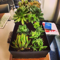 New plants for desk