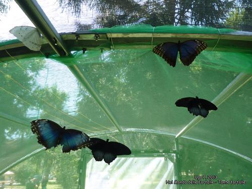 Nel Mondo delle Farfalle - Tante farfalle