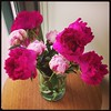 poppy picked out these beauties yesterday by bitsandbobbins