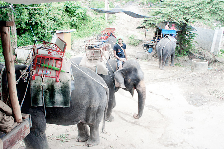 phuket elephant riding typicalben 4