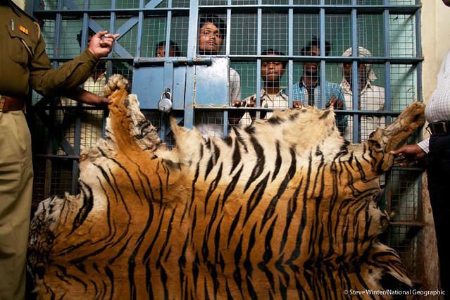 Poachers behind bars