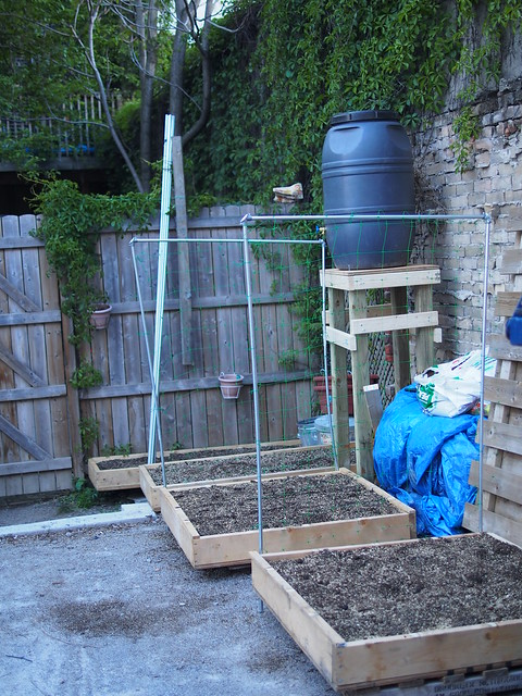 squart foot gardening, trellis, how to build a trellis, urban gardening, urban gardens toronto, parking spce garden