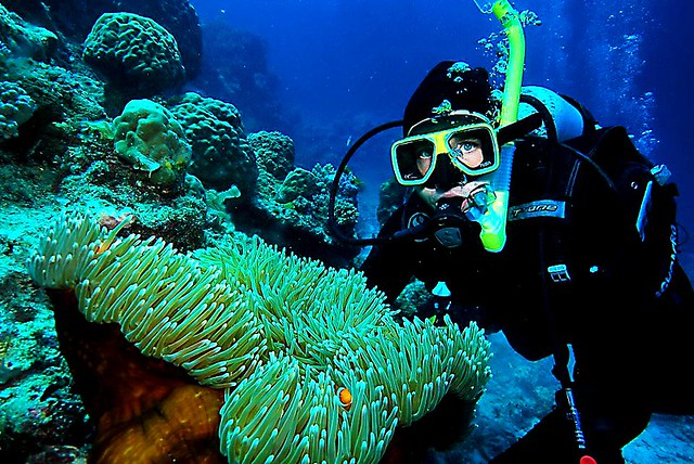 Tropical Nomad Diving Great Barrier Reef
