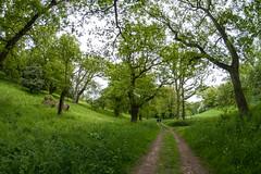 Woodland Walk from Cley Spy