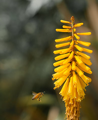 Honey Bee Finding