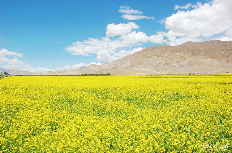 西藏.jpg