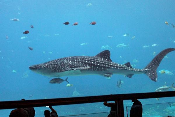 Georgia Aquarium, 11