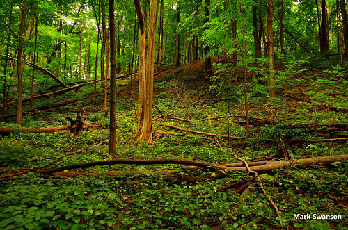 travel trees sunset lake color nature leaves pine landscape woods nikon michigan greatlakes trail d5100