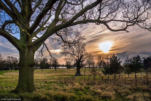 trees sunset england sun clouds unitedkingdom brightwellbaldwin blinkagain