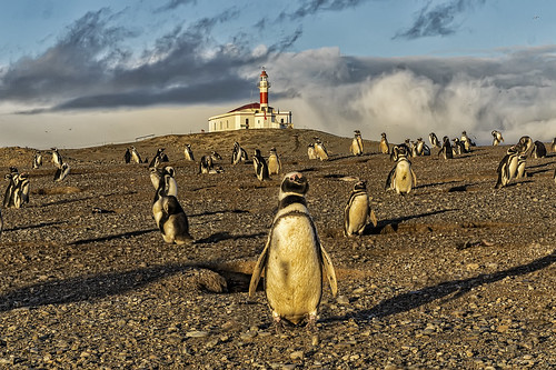 Penguins and Lighthouse Isla Magdalena