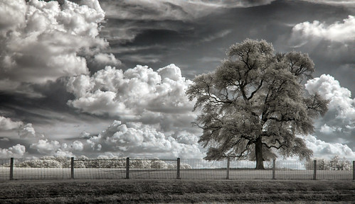 wallpaper sky tree field clouds fence landscape ir post farm infrared fenceposts mytree maxmaxcom xnitelumixlx3