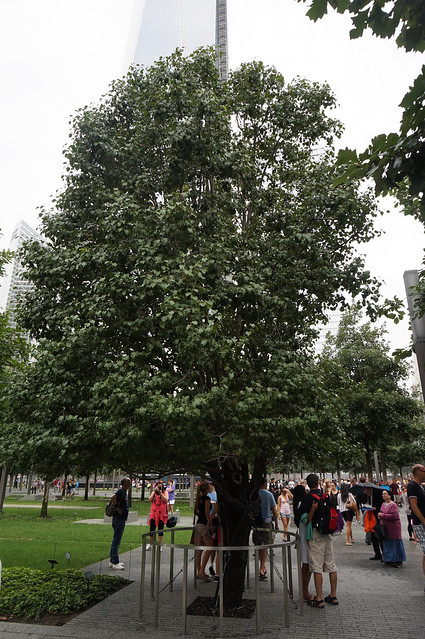 Survivor Tree National September 11 Memorial & Museum