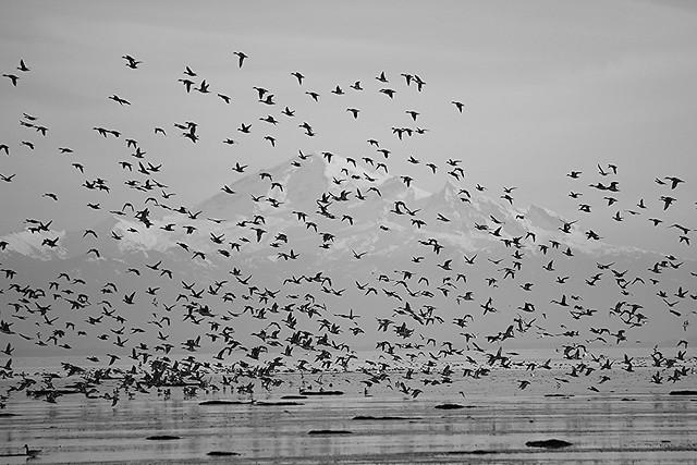 Bird Mountain