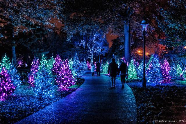 Garden Glow 2 Flickr Photo Sharing